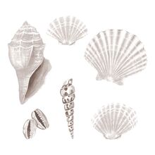 That's Mine Wall Stories Seashell White
