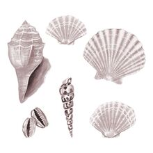 That's Mine Wall Stories Seashell Rose